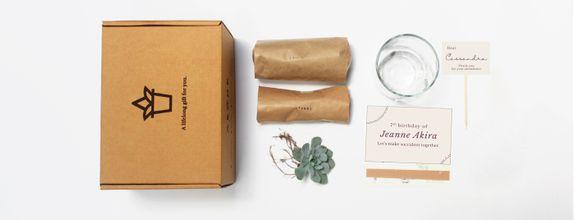 ABANE Succulent Signature Glass Planter Kit (Special 50 Pcs)