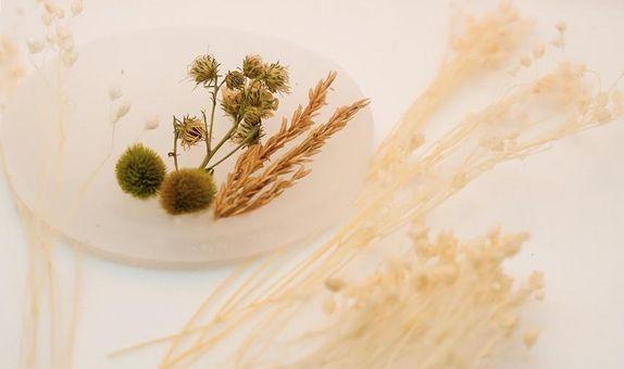 Botanical scents wax  Eustacia/ Lilin Pengharum ruangan Jasmine