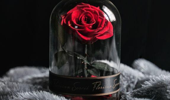 Eternal Rose | Petite de Rose