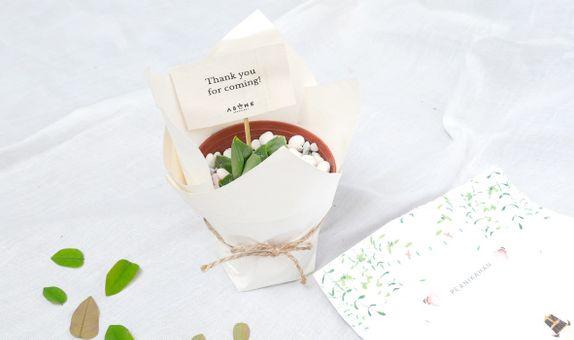 ABANE Succulent Basic Plastic Planter with Wrap