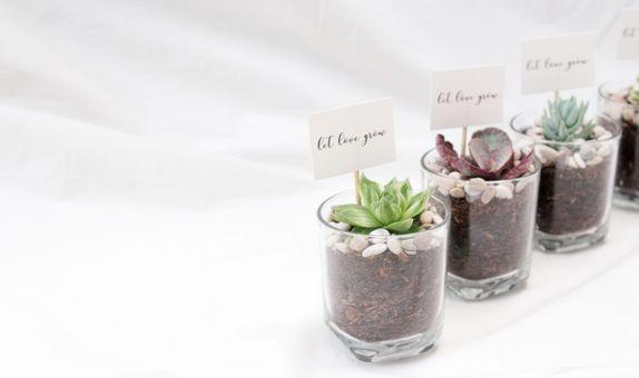 ABANE Succulent Basic Glass Planter (Special 50 Pcs)