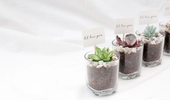 ABANE Succulent Basic Glass Planter