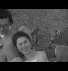 KOREAN WEDDING by Renaya Videography