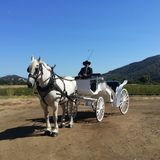 Wine Country Wedding Carriages
