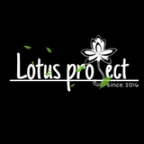lotus project decoration
