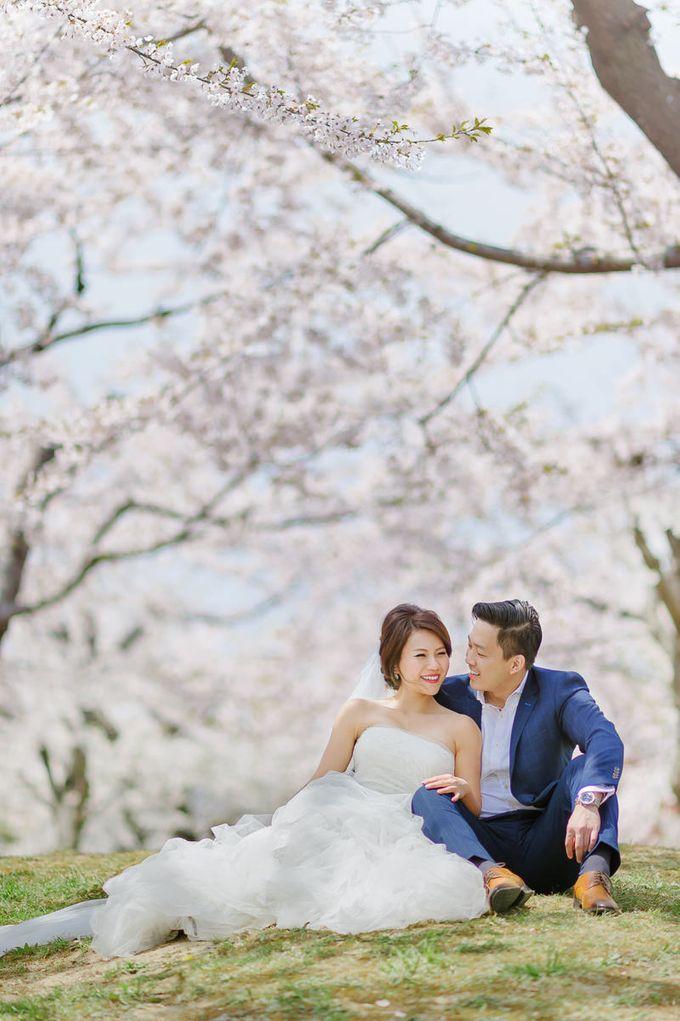 Full Bloom Hokkaido Sakura in Spring-Prewedding Overseas by John15 Photography - 003