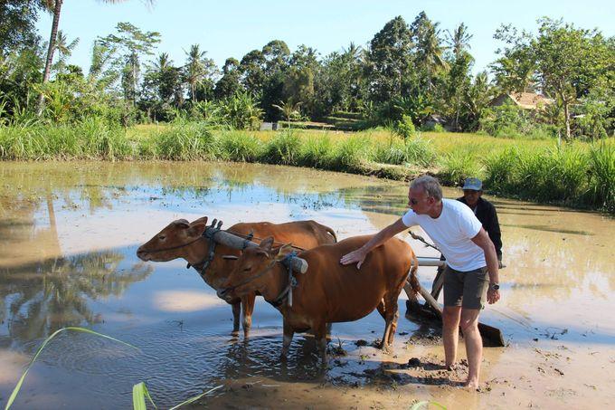 Rural Balinese Life & Farming by De Umah Bali - 002