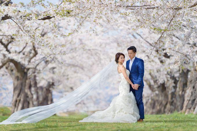 Full Bloom Hokkaido Sakura in Spring-Prewedding Overseas by John15 Photography - 004