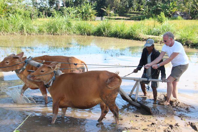 Rural Balinese Life & Farming by De Umah Bali - 011