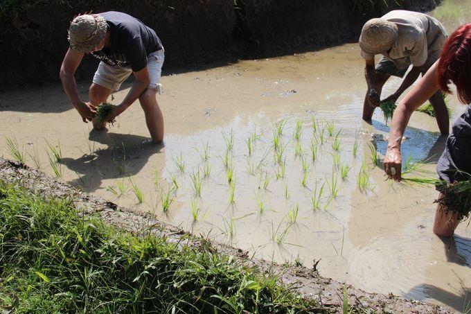 Rural Balinese Life & Farming by De Umah Bali - 013