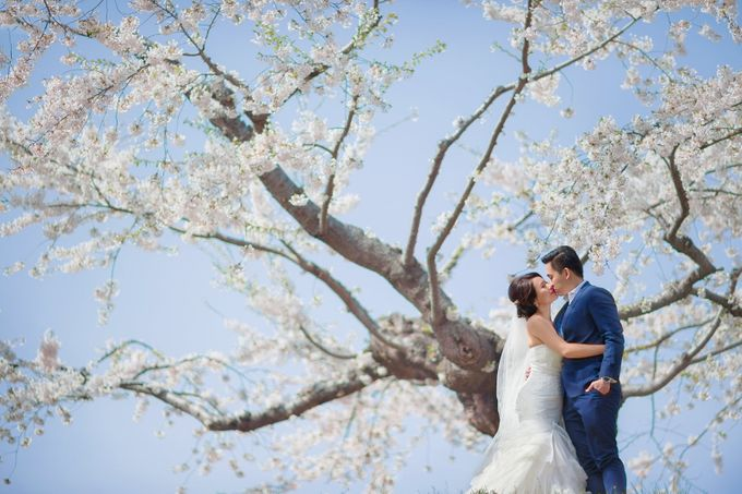 Full Bloom Hokkaido Sakura in Spring-Prewedding Overseas by John15 Photography - 008