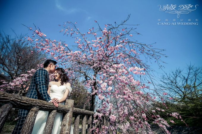 Cherry Blossom by Cang Ai Wedding - 001