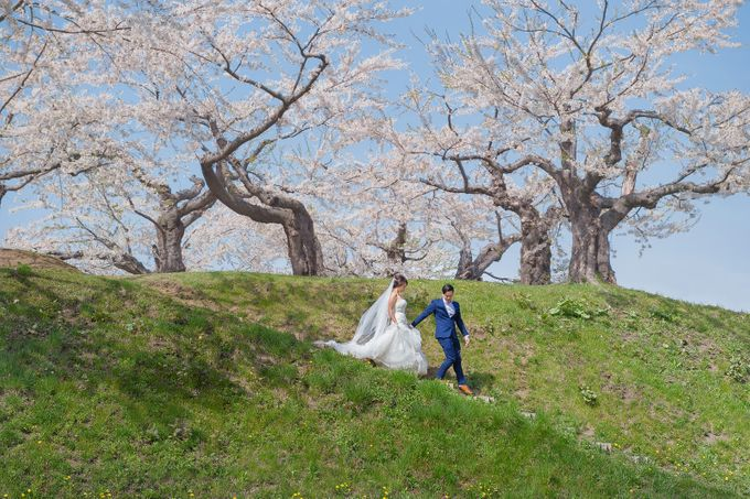 Full Bloom Hokkaido Sakura in Spring-Prewedding Overseas by John15 Photography - 009