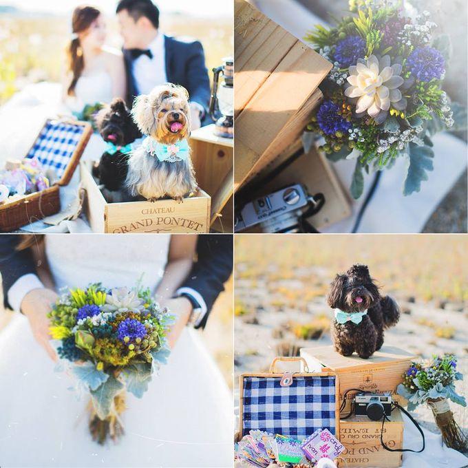 Ivan & Cindy Wedding by PetQuisite - 001