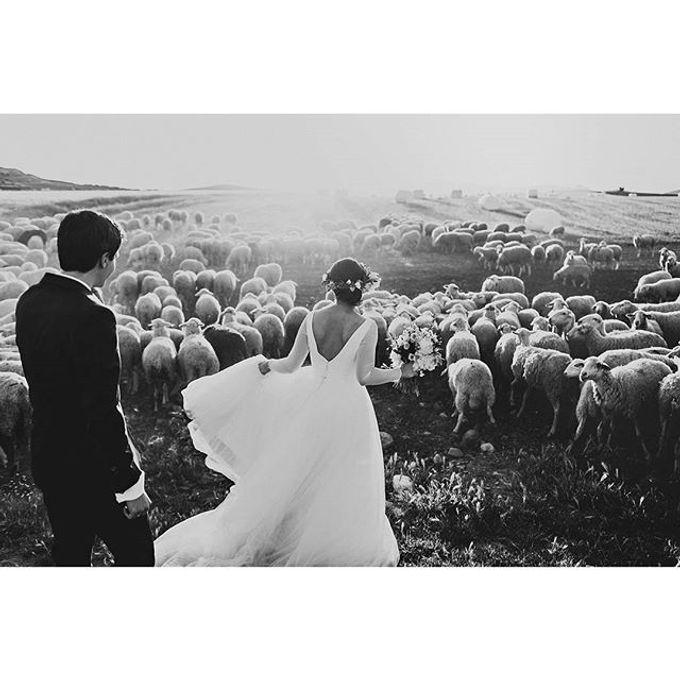 Best of Wedding Photos 2015 (Part 2) by People Truelove Tellers - 024
