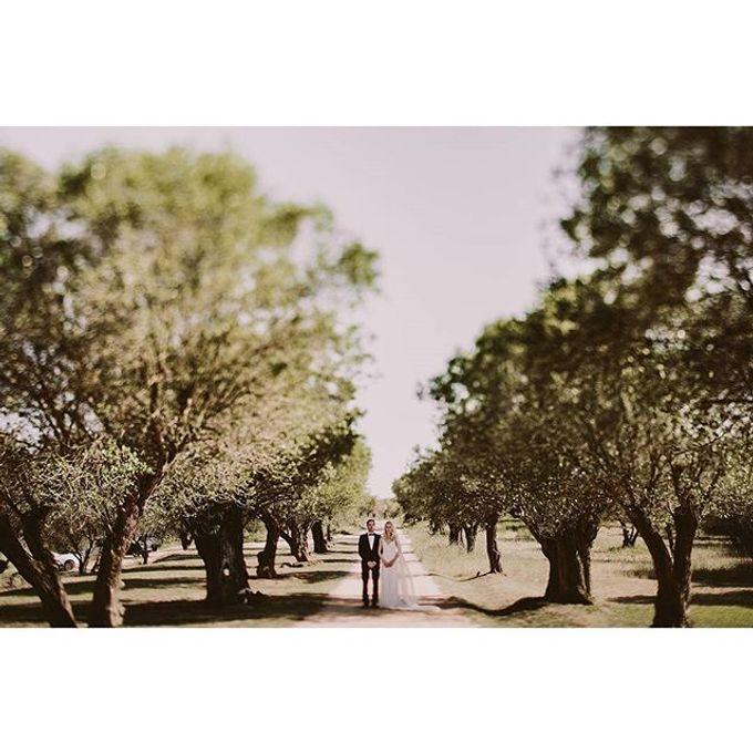 Best of Wedding Photos 2015 (Part 2) by People Truelove Tellers - 036