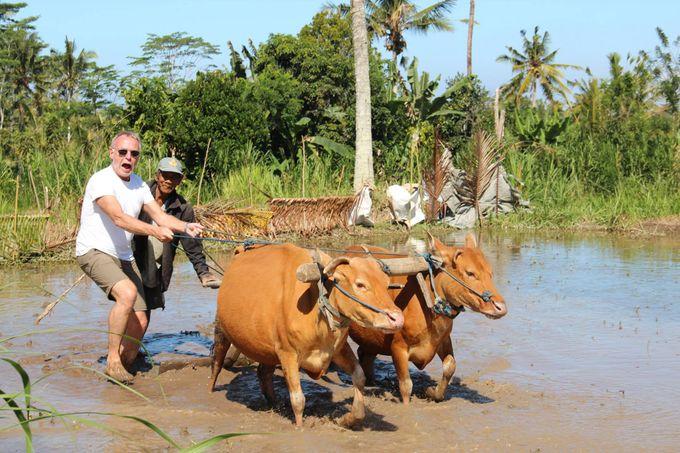 Rural Balinese Life & Farming by De Umah Bali - 006