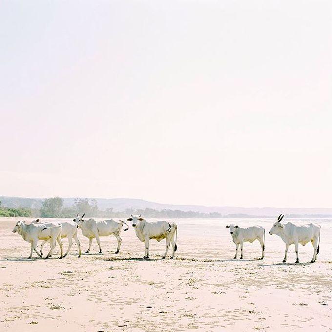 animal kingdom by gaillard mathieu - 020
