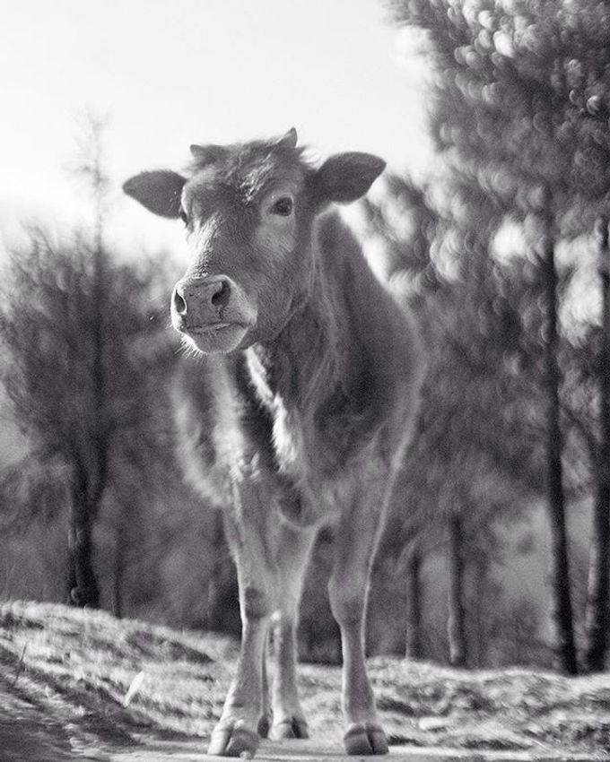 animal kingdom by gaillard mathieu - 015