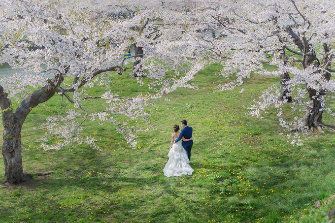 Full Bloom Hokkaido Sakura in Spring-Prewedding Overseas by John15 Photography - 011