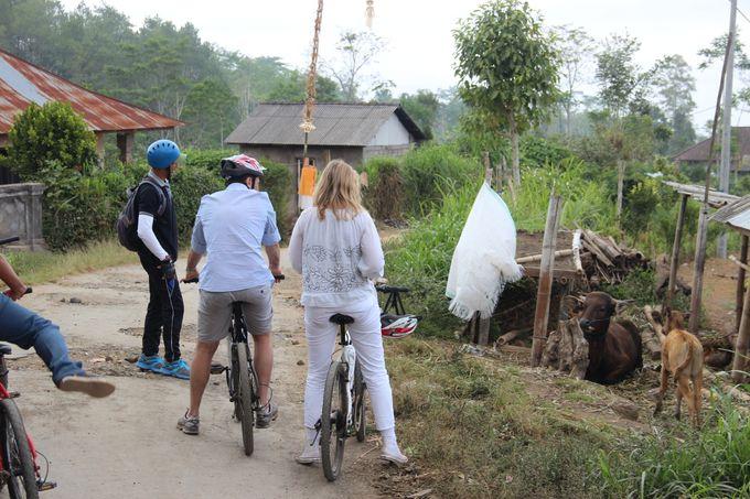 Activities - Eco Cycling by De Umah Bali - 020