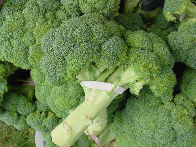 brokoli by bride test vendor - 003