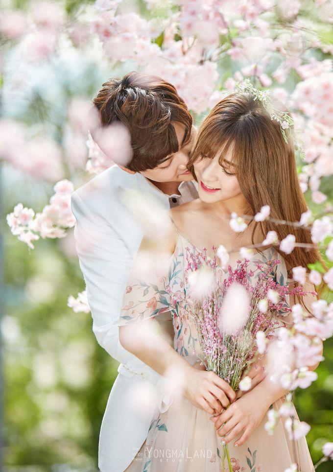 Korea Pre-Wedding Photoshoot - Studio 29 by Willcy Wedding by Willcy Wedding - Korea Pre Wedding - 010