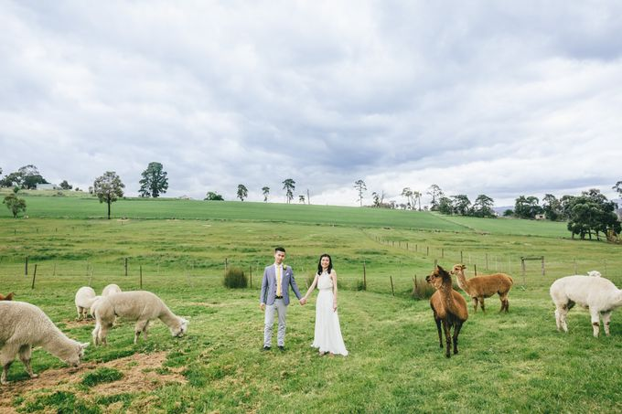 Yarra Valley Prewedding of Virginia & Felix by Widfotografia - 004