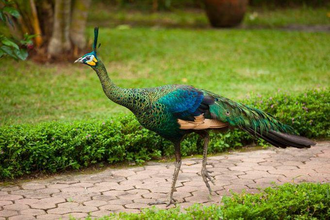 Garden Spa Resort by Puri Mas Lombok - 005