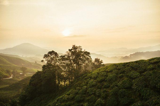 Tea Plantation Bridal Shoot by Peter Herman Photography - 002
