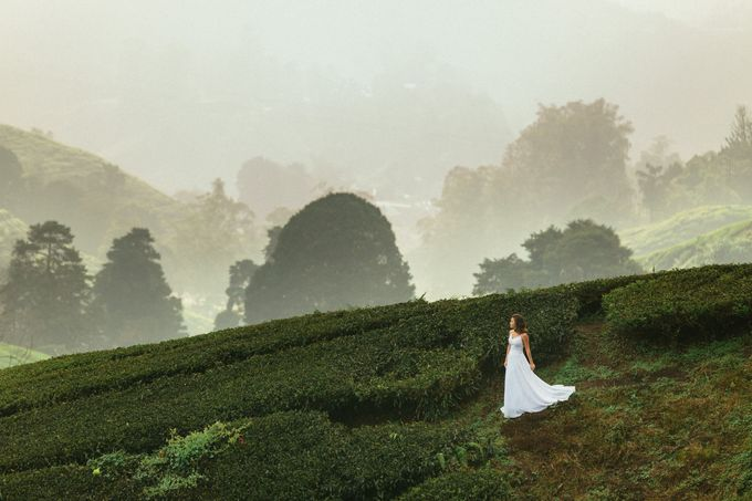 Tea Plantation Bridal Shoot by Peter Herman Photography - 003