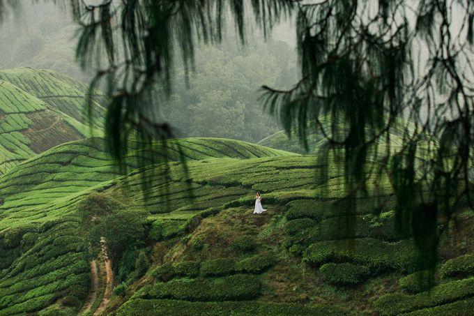 Tea Plantation Bridal Shoot by Peter Herman Photography - 005