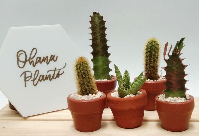 Souvenir Kaktus Mini Pot 3cm By Ohana Plants Bridestory Com
