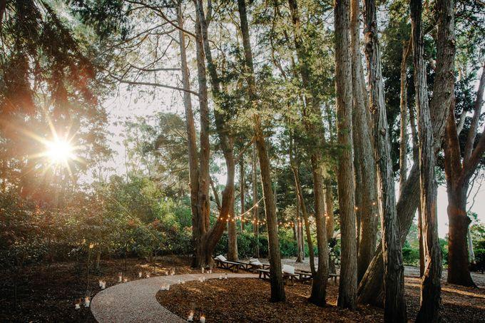 The woods by Gabbinbar Homestead - 001