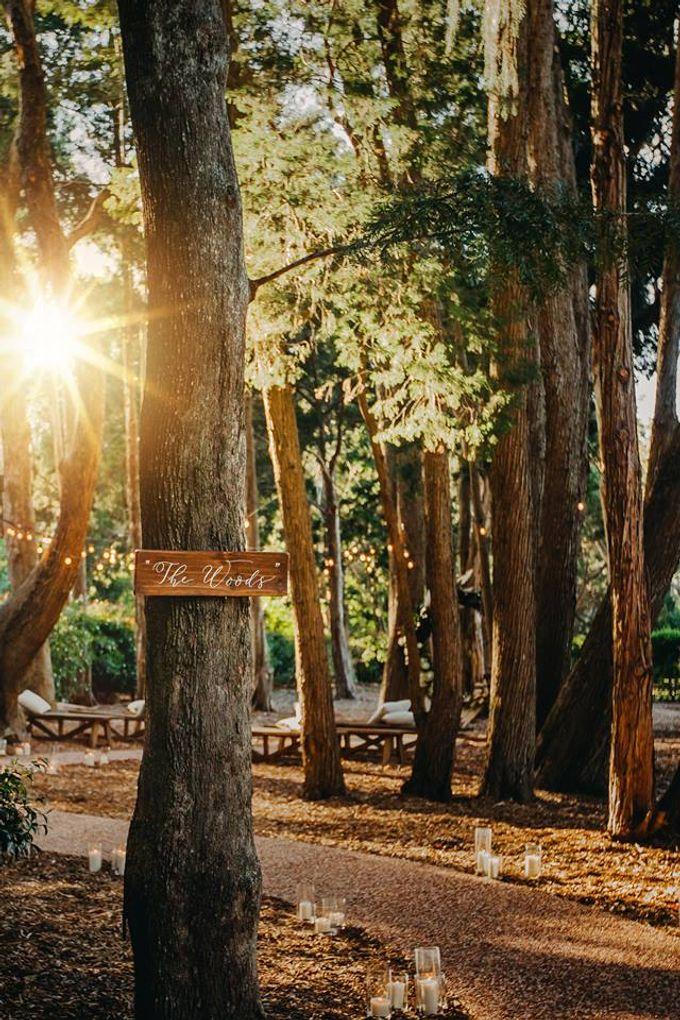 The woods by Gabbinbar Homestead - 002