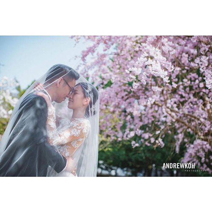Andrew Koh Photography Portfolio by Andrew Koh Photography - 017