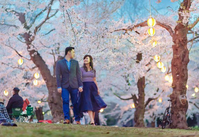 Full Bloom Hokkaido Sakura in Spring-Prewedding Overseas by John15 Photography - 032