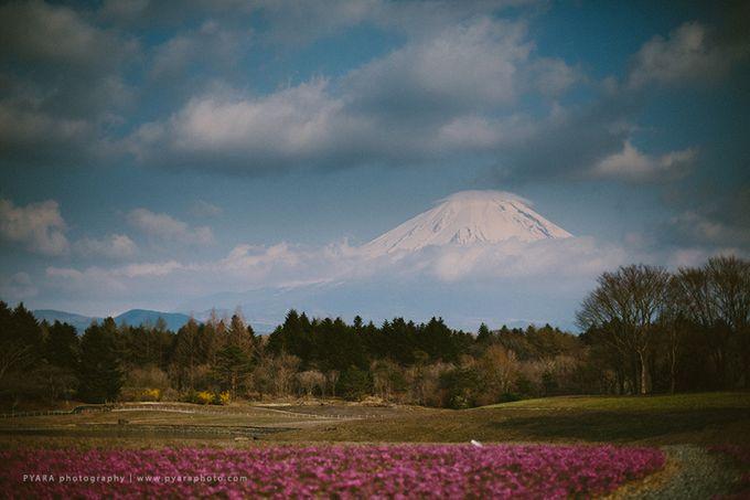 Selwyn Vitri | Japan Engagement Session by Carol by PYARA - 043