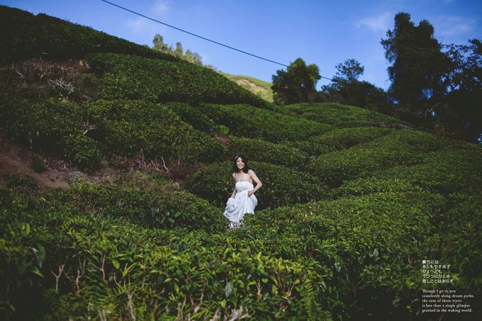 The best of  Pre-Wedding in Cameron Highland by maxtography - 003