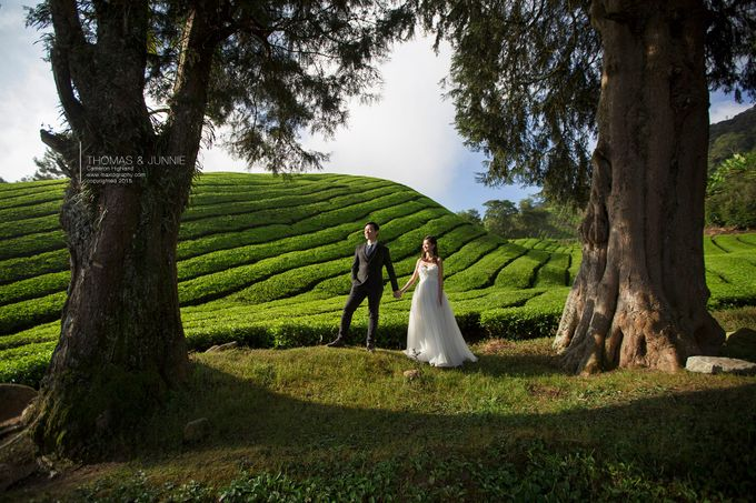 The best of  Pre-Wedding in Cameron Highland by maxtography - 011