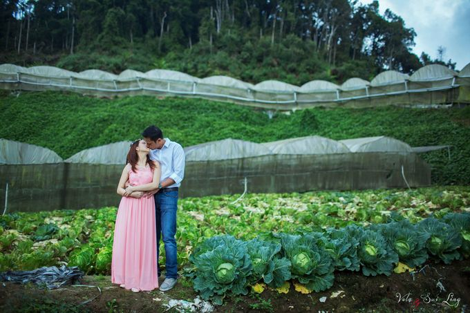 The best of  Pre-Wedding in Cameron Highland by maxtography - 008
