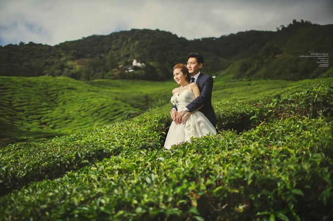 The best of  Pre-Wedding in Cameron Highland by maxtography - 016
