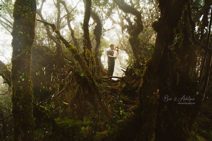 The best of  Pre-Wedding in Cameron Highland by maxtography - 017