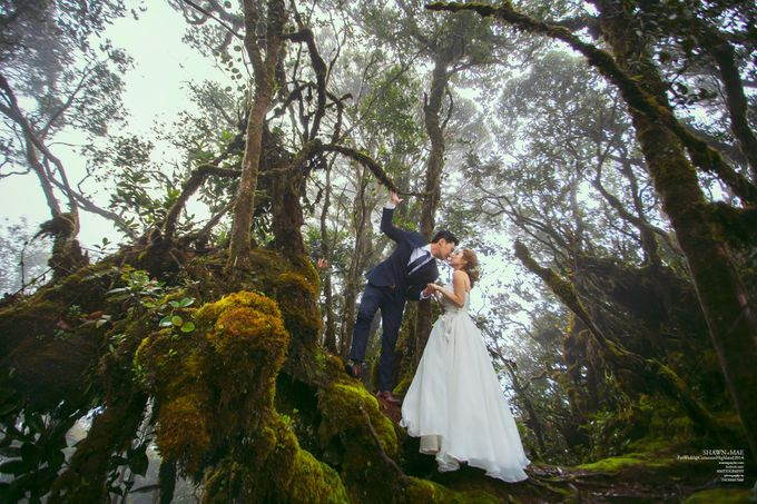 The best of  Pre-Wedding in Cameron Highland by maxtography - 022