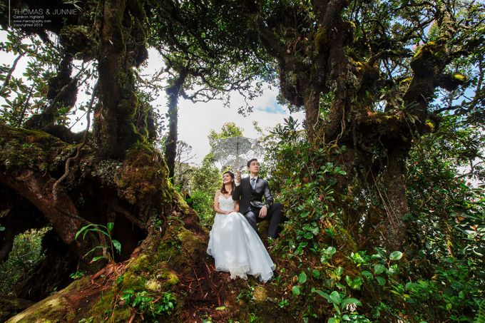 The best of  Pre-Wedding in Cameron Highland by maxtography - 023