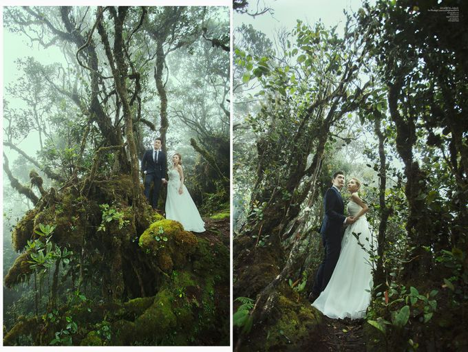 The best of  Pre-Wedding in Cameron Highland by maxtography - 028