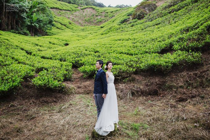 The best of  Pre-Wedding in Cameron Highland by maxtography - 029
