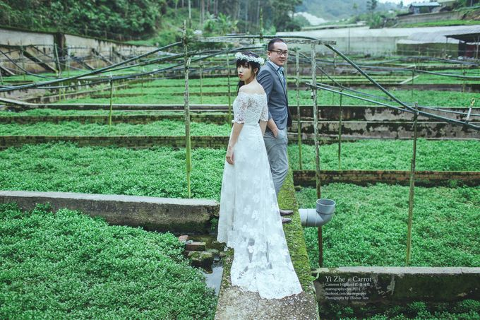 The best of  Pre-Wedding in Cameron Highland by maxtography - 030