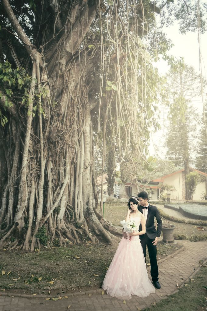 Color of Harmony Preweding by Creative by dre - 002