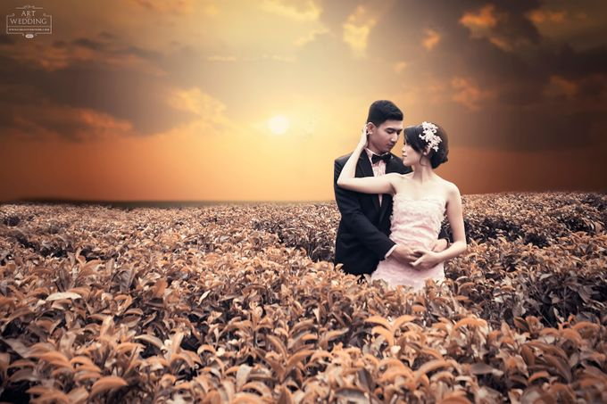 Color of Harmony Preweding by Creative by dre - 005